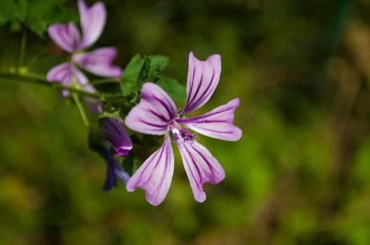 Flower Purple Plant #14405