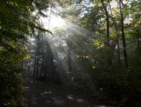 Tree Landscape Forest #14433