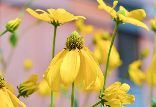 Flower Sunflower Yellow #14470