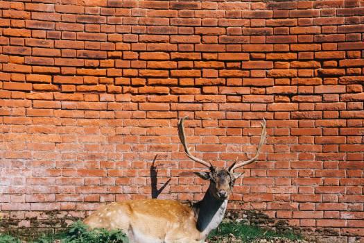 Deer Impala Antelope #14498