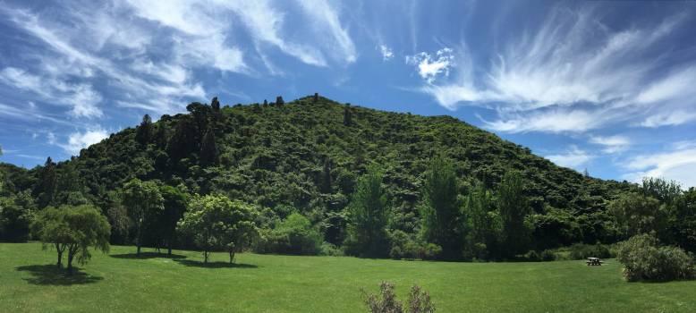 Landscape Tree Grass #145318