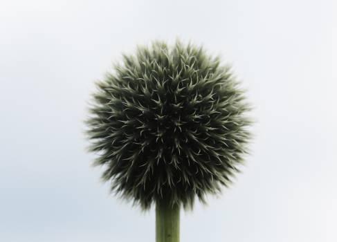 Sea urchin Echinoderm Leaf #14535