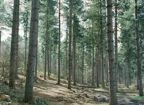 Tree Forest Landscape #14568