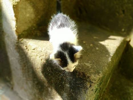 Giant panda Musteline mammal Skunk #145881