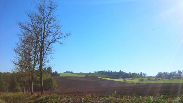 Sky Landscape Tree #146004