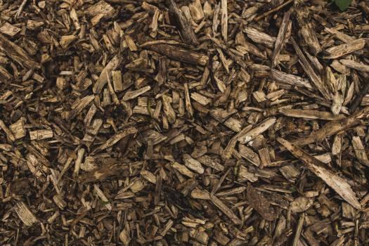 Tea Leaf Leaves #146027