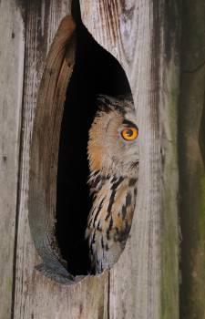 Bird Owl Animal #14607