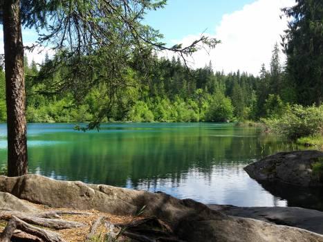 Swamp Lake Water #146152