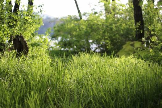 Plant Field Grass Free Photo