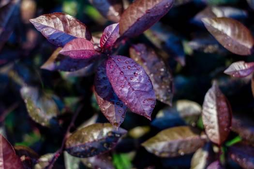 Shrub Woody plant Vascular plant #146388