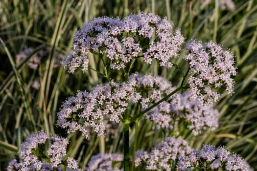 Herb Vascular plant Plant #146392