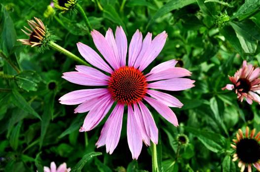 Flower Daisy Plant #14675