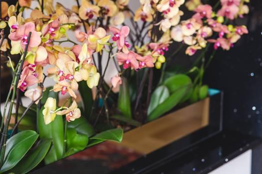 Flower Plant Flowers #14685
