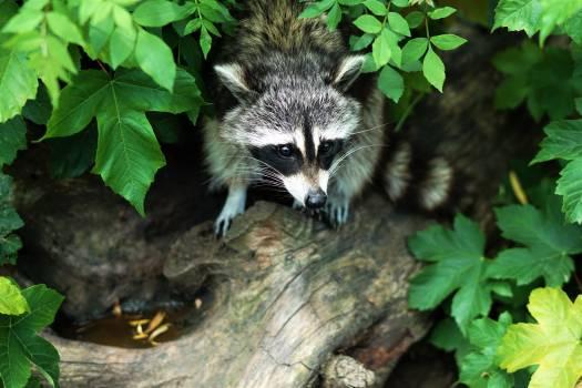 Fox Canine Arctic fox #146926