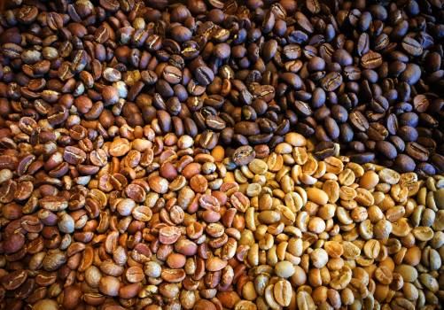 Edible nut Nut Seed #147074