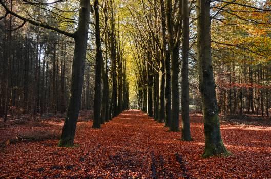 Tree Landscape Forest #14757
