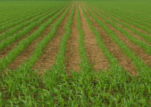 Field Farmer Agriculture Free Photo