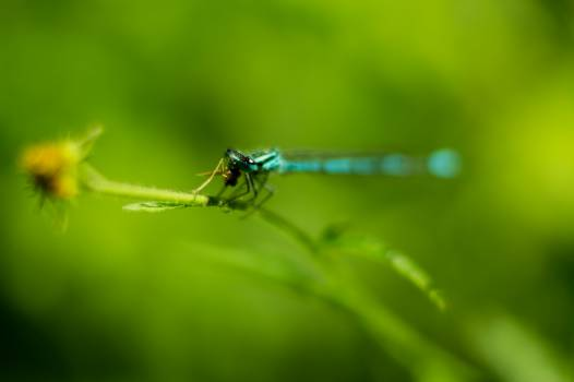 Insect Damselfly Arthropod #14788