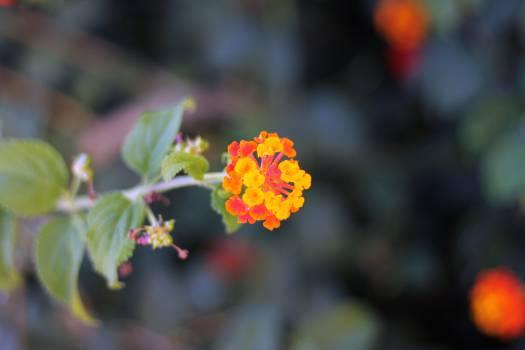 Flower Petal Plant #14796