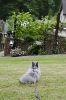 Kitten Cat Pet #148020