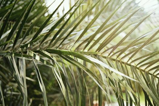 Wheat Cereal Grain #148095