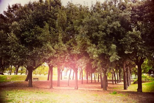 Oak Tree Forest #14813