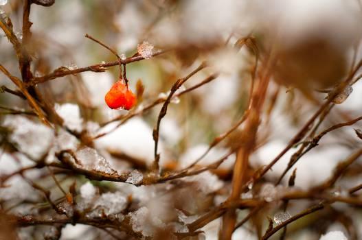 Branchlet Branch Plant #14816