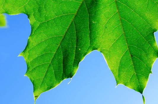 Greenery Leaf Plant Free Photo