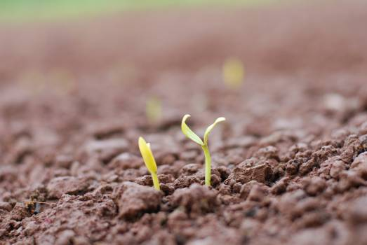 Seedling Sprout Plant Free Photo