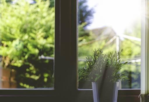 Tree Plant Windowsill #148365
