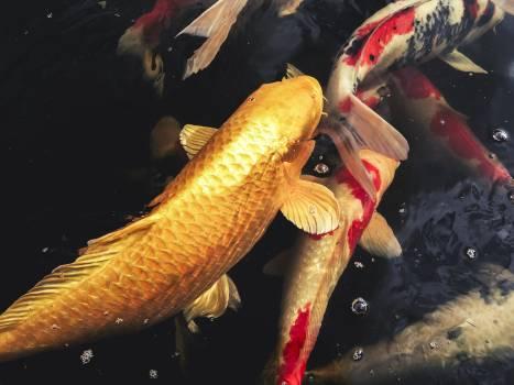 Fish Bass Water Free Photo