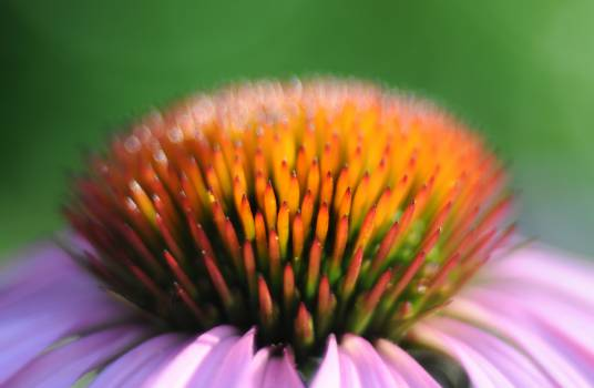 Flower Plant Clover Free Photo