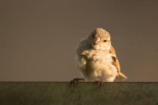 Bird Animal Owl #14897