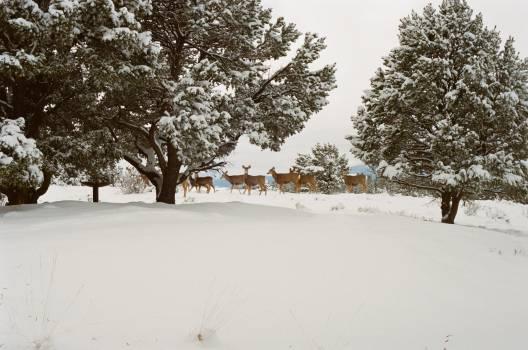 Snow Ice Winter #14911