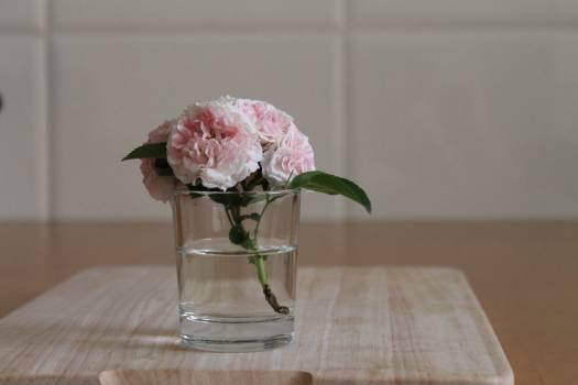 Vase Jar Vessel #149329