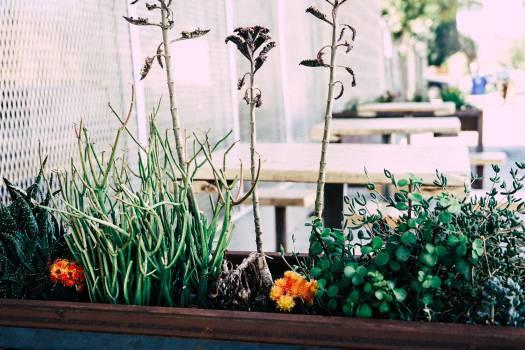 Pot Plant Flower #14990