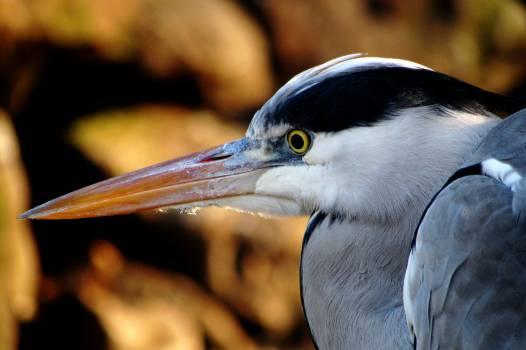 Bird Crane Aquatic bird #15004