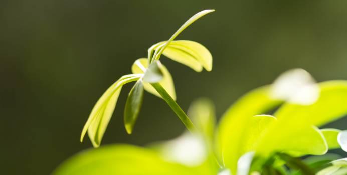 Leaf Plant Growth Free Photo