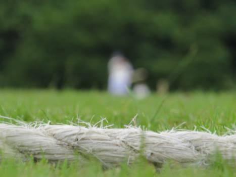 Grass Field Meadow Free Photo