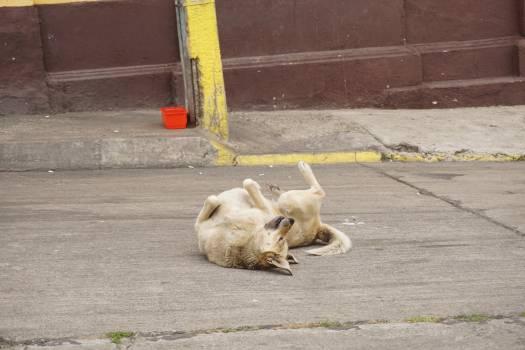Dog Terrier Hunting dog #150454