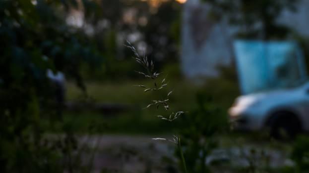 Spider Spider web Arachnid Free Photo