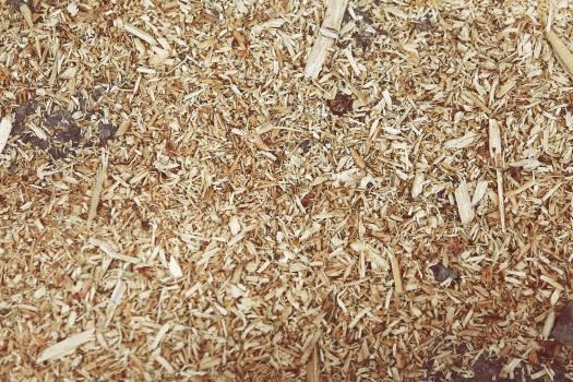 Wheat Grain Food #15102