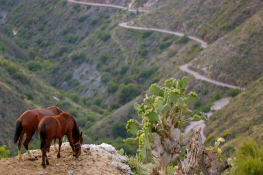 Horse Horses Grass Free Photo