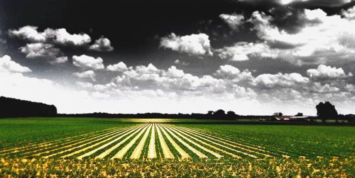 Landscape Field Farming Free Photo