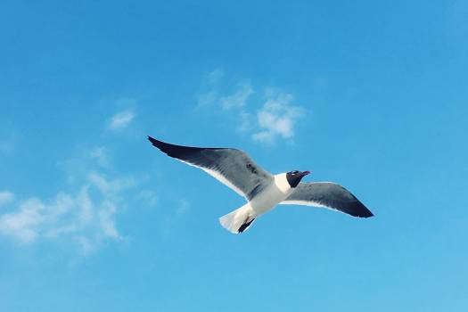 Albatross Seabird Aquatic bird #151219