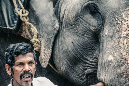 Elephant Wrinkle Mammal #151272