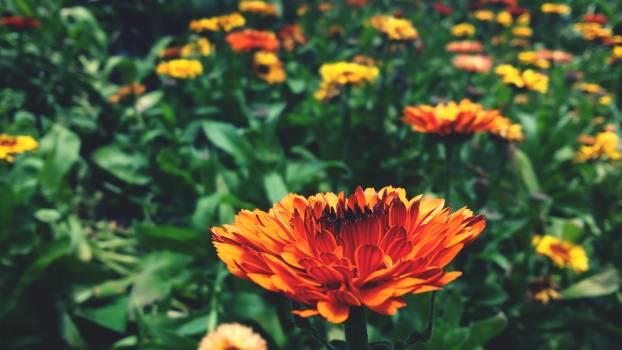 Orange Flower Plant #151380