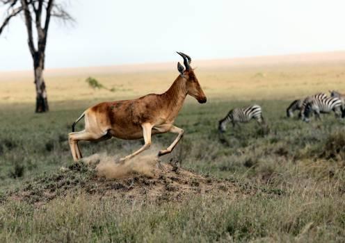 Antelope Buck Wildlife #151433