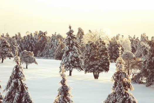 Snow Tree Winter #15154