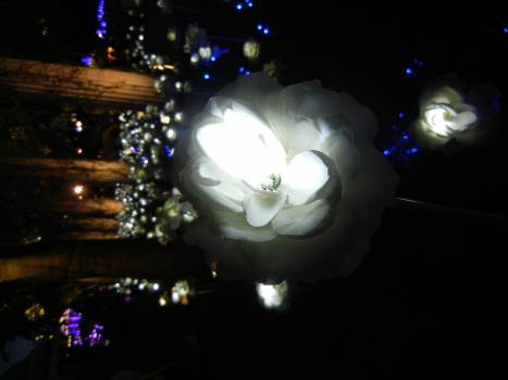 Chandelier Lights Globe Free Photo